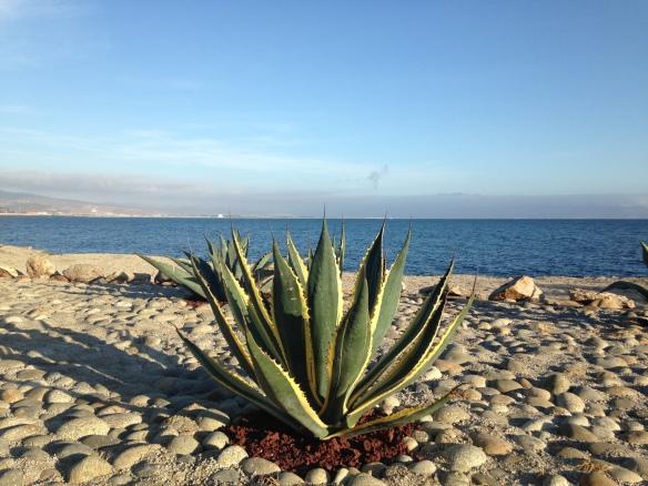 El hermoso mar de Ensenada.  Foto: María A. Mejía